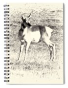 Pronghorn Angelope Spiral Notebook