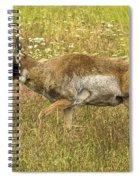 Pronghorn Antelope Spiral Notebook