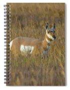 Pronghorn At Golden Hour Spiral Notebook