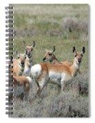 Pronghorn Harem Spiral Notebook