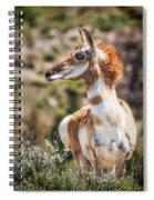 Pronghorn Mother Spiral Notebook