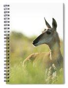 Pronghorn Spiral Notebook