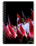 Protea 1 Spiral Notebook