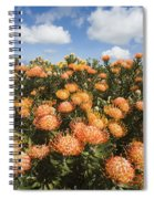 Protea Blossoms Spiral Notebook