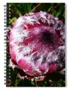 Protea Flower 1 Spiral Notebook