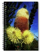 Protea Flower 5 Spiral Notebook