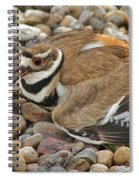 Protecting The Nest Spiral Notebook