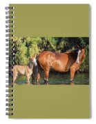 Proud Mare Spiral Notebook