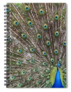 Proud Peacock Spiral Notebook