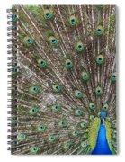 Proud Peacock Spiral Notebook