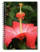 Provocative Hibiscus Spiral Notebook