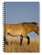 Przewalskis Stallion Spiral Notebook