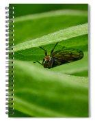 Psyllid Spiral Notebook
