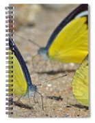 Puddling Spiral Notebook
