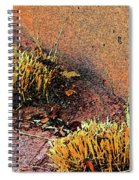 Pueblo Downtown Landscaping Spiral Notebook