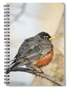 Puffed Robin Spiral Notebook