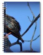 Puffed Up Starling Spiral Notebook