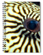 Pufferfish Spiral Notebook