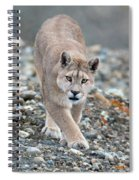 Puma Walk Spiral Notebook
