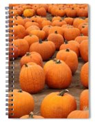 Pumpkins Waiting For Homes Spiral Notebook
