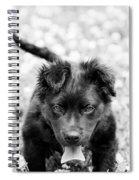 Puppy Play Spiral Notebook