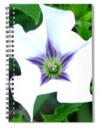 Pure Passion Spiral Notebook