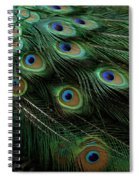 Pure Peacock Spiral Notebook