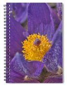 Purple And Gold Spiral Notebook