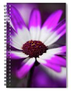 Purple And White Daisy  Spiral Notebook