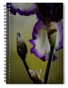 Purple And White Iris Flower Spiral Notebook