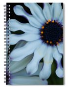 Purple And White Spiral Notebook