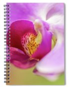 Purple And White Orchid 2 Spiral Notebook