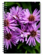 Purple Aster Blooms Spiral Notebook