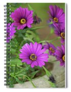 Purple Aster Flowers Spiral Notebook
