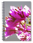 Purple Bougainvillea Flower Spiral Notebook