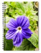 Purple Browallia Flower Spiral Notebook