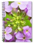 Purple Circle Of Dames Rocket Phlox In Spring Garden Spiral Notebook