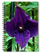 Purple Clematis Henryi Spiral Notebook