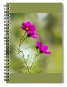 Purple Cosmos Flowers Square Spiral Notebook