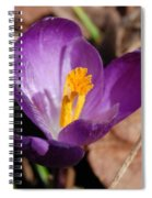 Purple Crocus Spiral Notebook
