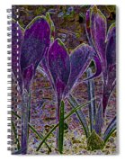 Purple Crocuses  Spiral Notebook