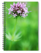 Purple Crosswort Flower Spiral Notebook