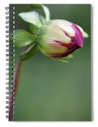 Purple Dahlia Flower Bud Spiral Notebook