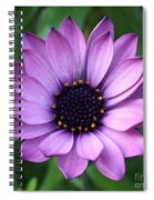 Purple Daisy Square Spiral Notebook
