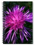 Purple Dandelions 4 Spiral Notebook