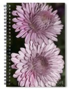 Purple Duo Spiral Notebook