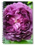 Purple English Rose Spiral Notebook