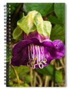 Purple Flower Of The Vine Known As Cathedral Bells Spiral Notebook