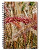 Purple Fountain Grass Abstract By H H Photography Of Florida Spiral Notebook
