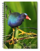 Purple Gallinule Spiral Notebook
